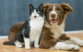 cat-dog-indoors.jpg