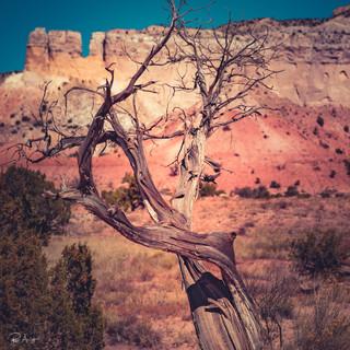 el-nicho-robert-arrington-photography-16
