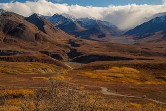 Denali: Autumn Gold VI
