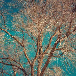 Cottonwood Winter | Santa Fe, New Mexico