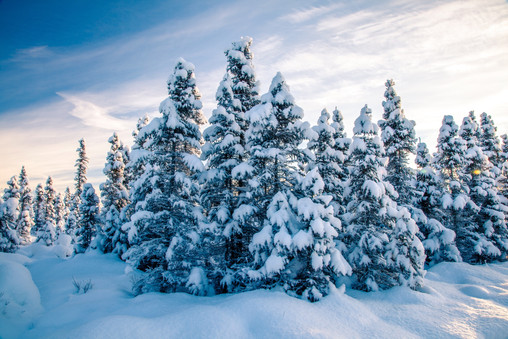 robert-arrington-alaska-winter-24.jpg