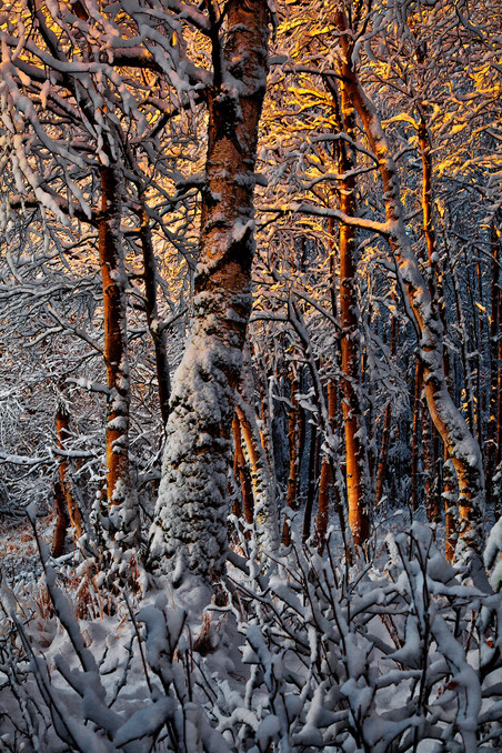 robert-arrington-alaska-winter-05.jpg