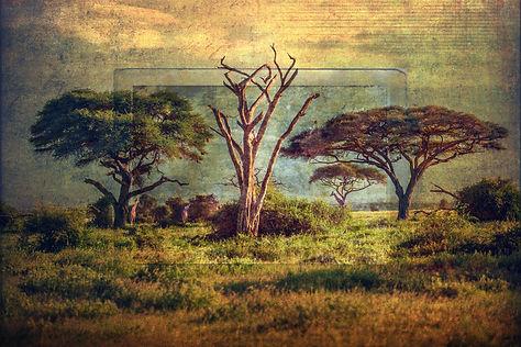 robert-arrington-kenya-006.jpg