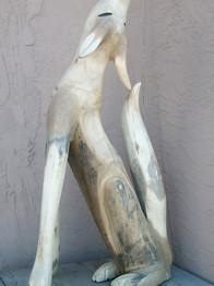 Coyote by Pete Ortega