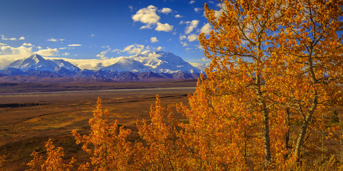 Denali: Autumn Gold I