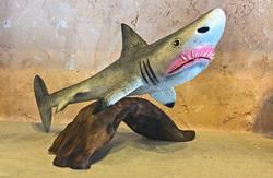 Joe Ortega Great White Shark