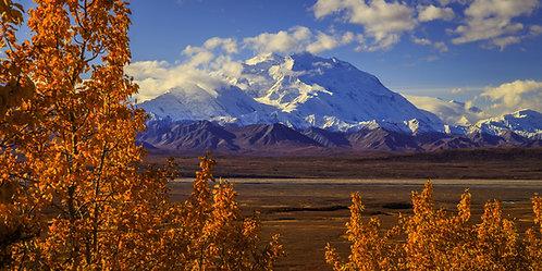 Denali National Park, Alaska   Vivid Metal Print