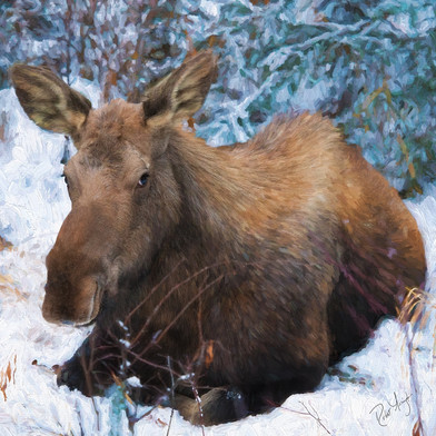 robert-arrington-alaska-wildlife-05.jpg