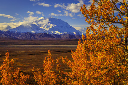 Denali: Autumn Gold III