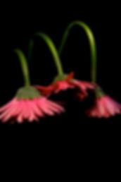 Flower 28.jpg