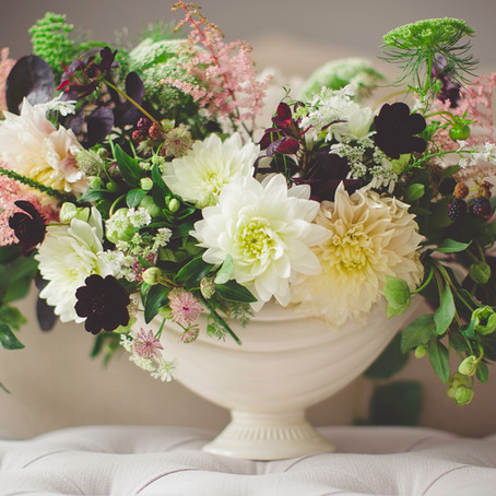 4 Tips Feng Shui para tus Plantas