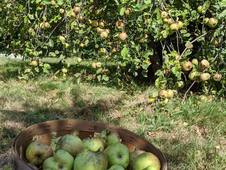 Harvest & Gathering