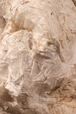 Chrysalis close up)