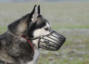 Muzzle Training: The Benefits of Muzzle Training
