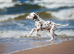 Swimming: How To Introduce Your Dog To Water