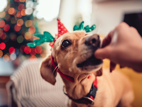 The Naughty List: Christmas Foods Your Dog Needs To Avoid