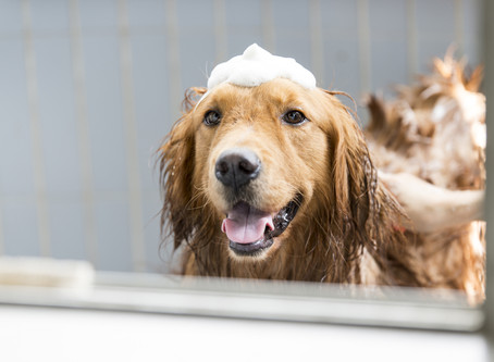Are You Bathing Your Dog Too Much?