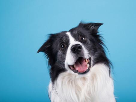 5 Biggest Myths About Dog Behaviours