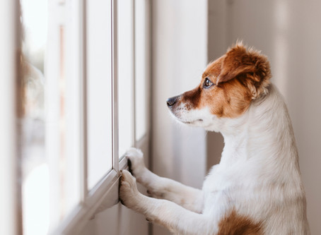 Life After Lockdown: Preparing Your Dog For The New Normal And A Change In Circumstance