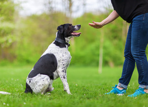 The 5 Commandments: 5 Commands Your Dog Should Be Taught