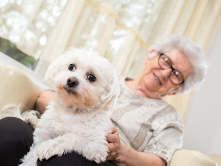 Our Therapy Dog Team: Pet Therapy and Aged Care Residents
