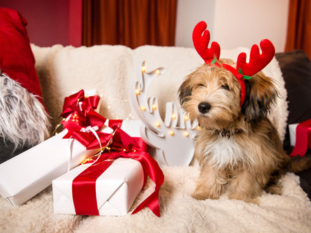 The Paw-Fect Christmas Gift: Our Top 10 Christmas Gifts for your Dog