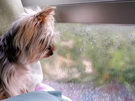 Dogs and Storms: How To Keep My Dog Calm During A Thunderstorm?