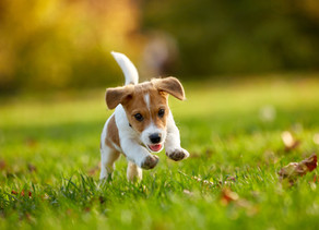 How to Fast Track Toilet Training: Toilet Training Your New Puppy