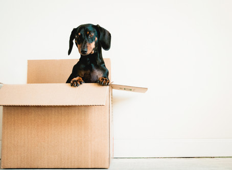 Moving to A New House: How to Help Your Dog Adjust to A New Home