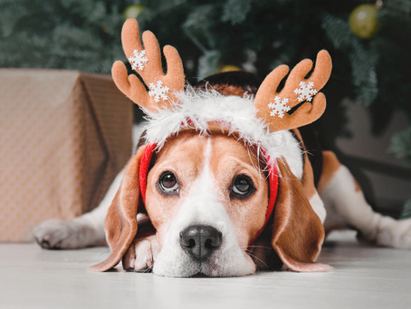Festive Safety: Our Top Tips To Help Keep Your Dog Safe This Christmas