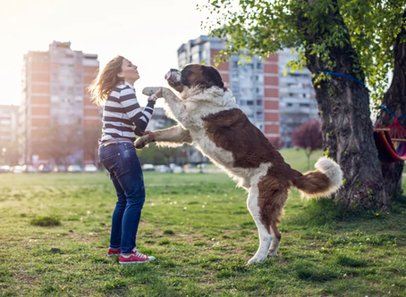 How To Stop My Dog From Jumping: Why It Happens and How To Stop It?