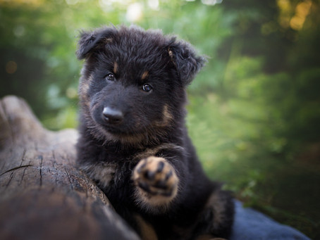 PUPPY TRAINING // Shaping Confident Behaviour: The Importance of Exposing a Puppy To New Sounds