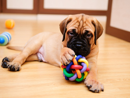 The Essentials: Getting A Puppy? Here Is What You Need To Buy