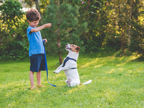 How To Include Your Children With Training Your Dog
