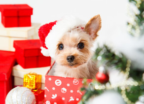 Christmas Puppy: Our Top Tips For your Latest Addition