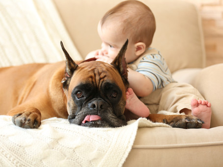 Introducing Your Baby To A Home With An Existing Dog