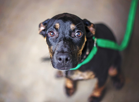 Anxiety In Dogs: Go At Their Own Pace