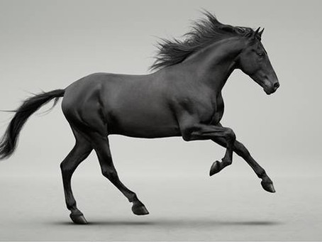 Trakehner: Get to Know Your Equine Breeds