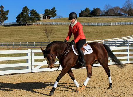 Saddle Up! Considerations for Saddling Your Horse
