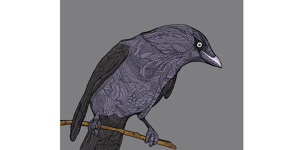 A4 Grey Jackdaw - Signed and Numbered