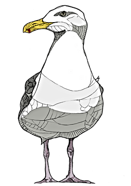 Seagull Bird.png