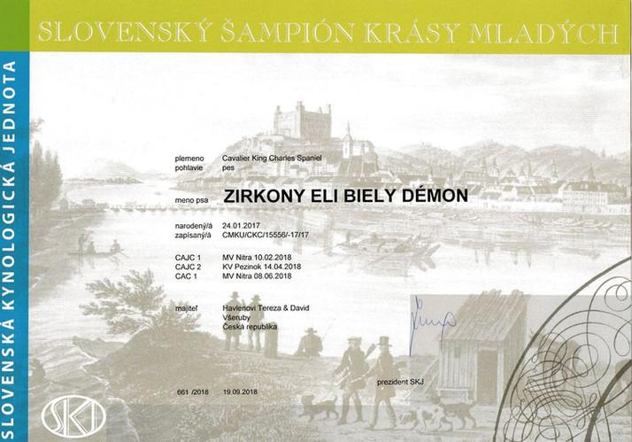 Zirkony SK jr champion_result.jpg