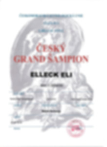 Baryon_Grand_Šampion011.jpg
