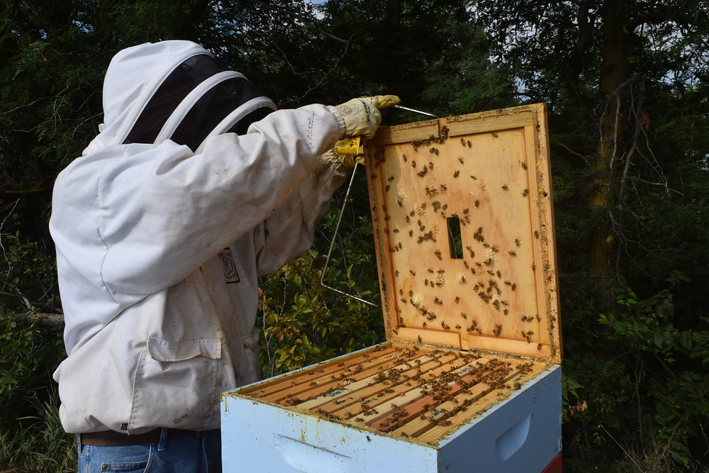 Opening the beehive