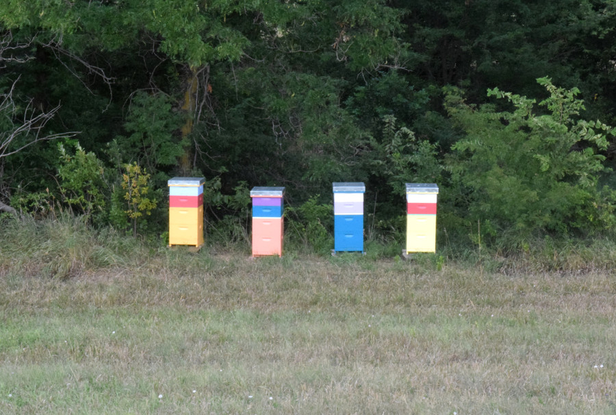 An Insider's Look at Beekeeping