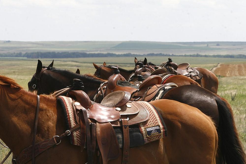 horses on horizon