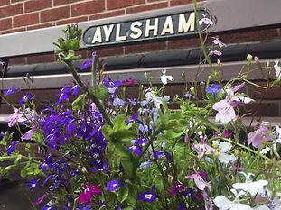 Aylsham in Bloom flowers with Aylsham si