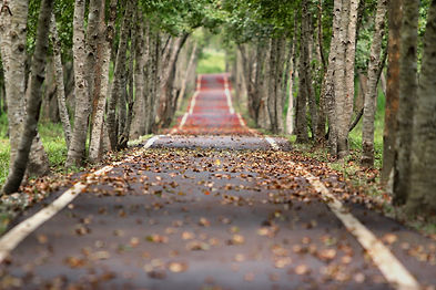 road-nature-trees-branches-38537.jpg