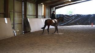 centre equestre treverno dressage