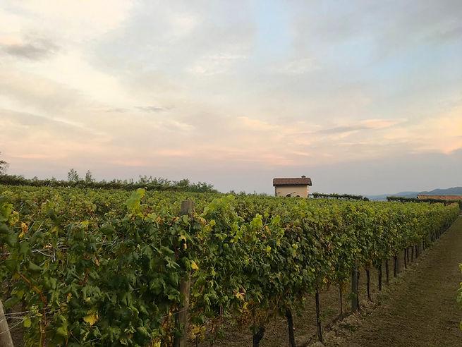 vineyard_skyline3.jpg